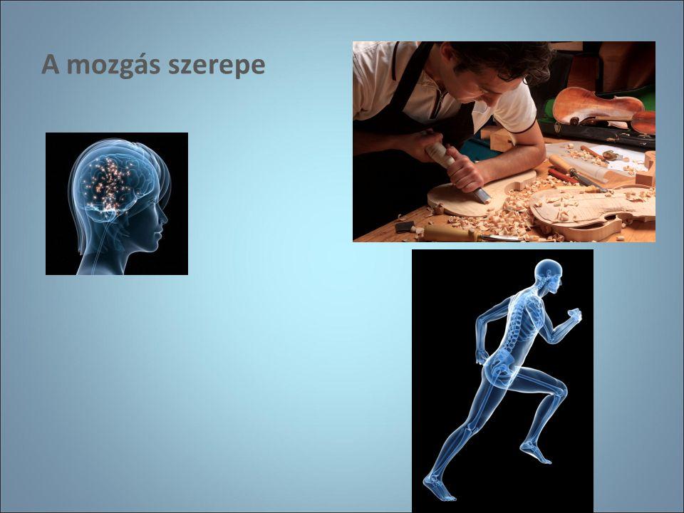 A mozgás szerepe