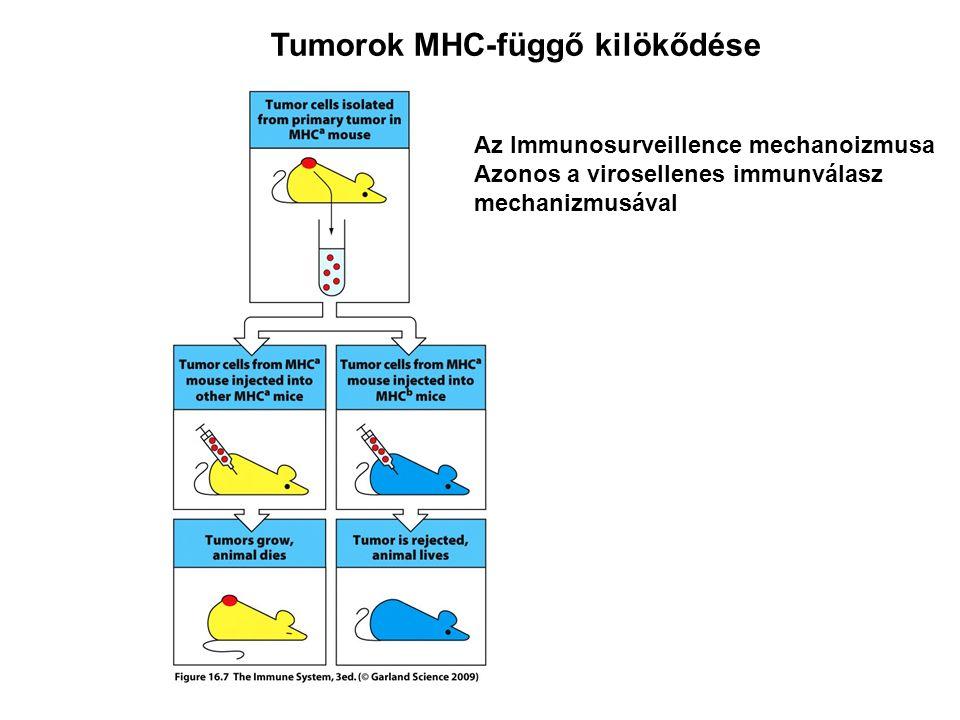 Tumorok MHC-függő kilökődése Az Immunosurveillence mechanoizmusa Azonos a virosellenes immunválasz mechanizmusával