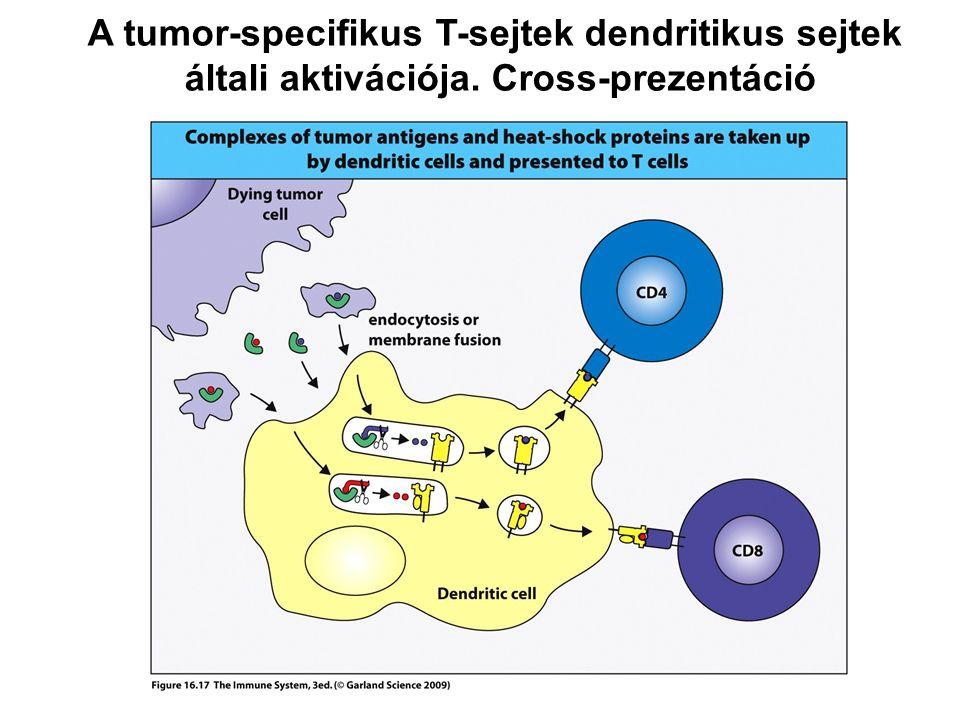 A tumor-specifikus T-sejtek dendritikus sejtek általi aktivációja. Cross-prezentáció