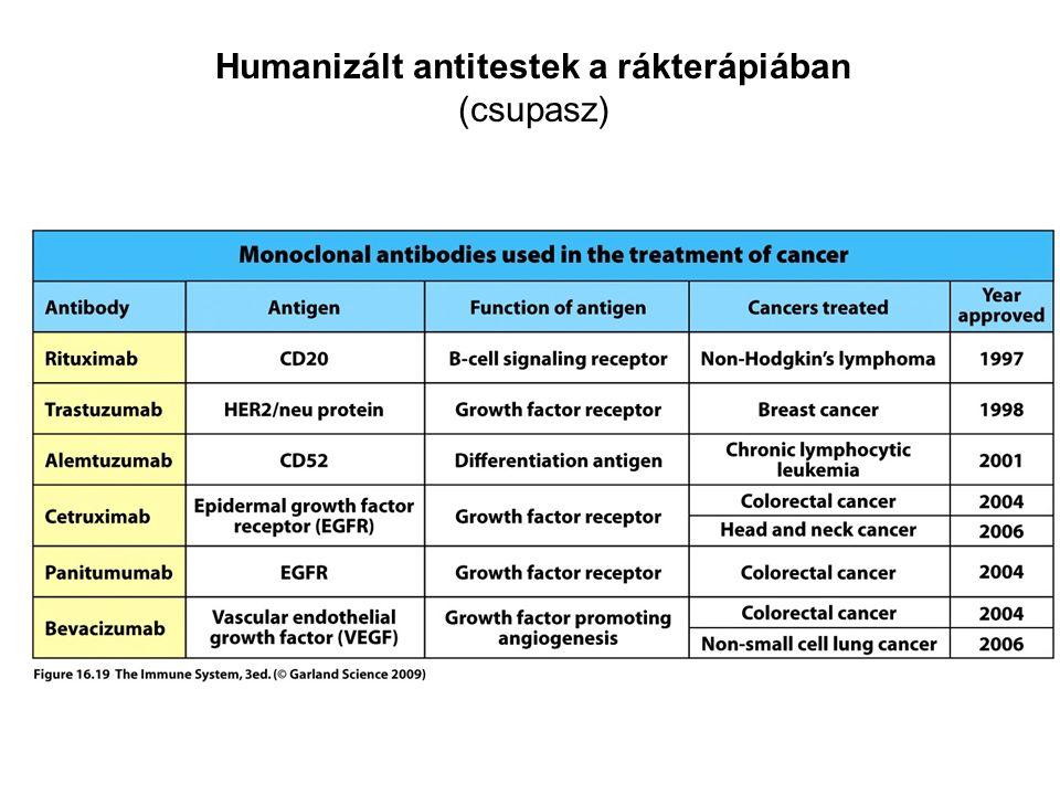 Humanizált antitestek a rákterápiában (csupasz)