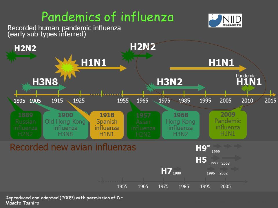 Pandemics of influenza H7 H5 H9 * 1980 1997 Recorded new avian influenzas 19962002 1999 2003 195519651975198519952005 H1N1 H2N2 1889 Russian influenza H2N2 1957 Asian influenza H2N2 H3N2 1968 Hong Kong influenza H3N2 H3N8 1900 Old Hong Kong influenza H3N8 1918 Spanish influenza H1N1 19151925195519651975198519952005 18951905 2010 2015 2009 Pandemic influenza H1N1 Recorded human pandemic influenza (early sub-types inferred) Reproduced and adapted (2009) with permission of Dr Masato Tashiro, Director, Center for Influenza Virus Research, National Institute of Infectious Diseases (NIID), Japan.