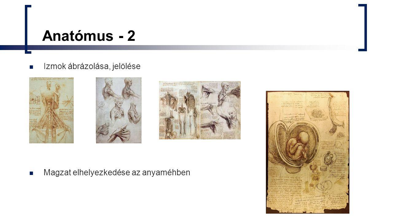 Anatómus - 2 Izmok ábrázolása, jelölése Magzat elhelyezkedése az anyaméhben