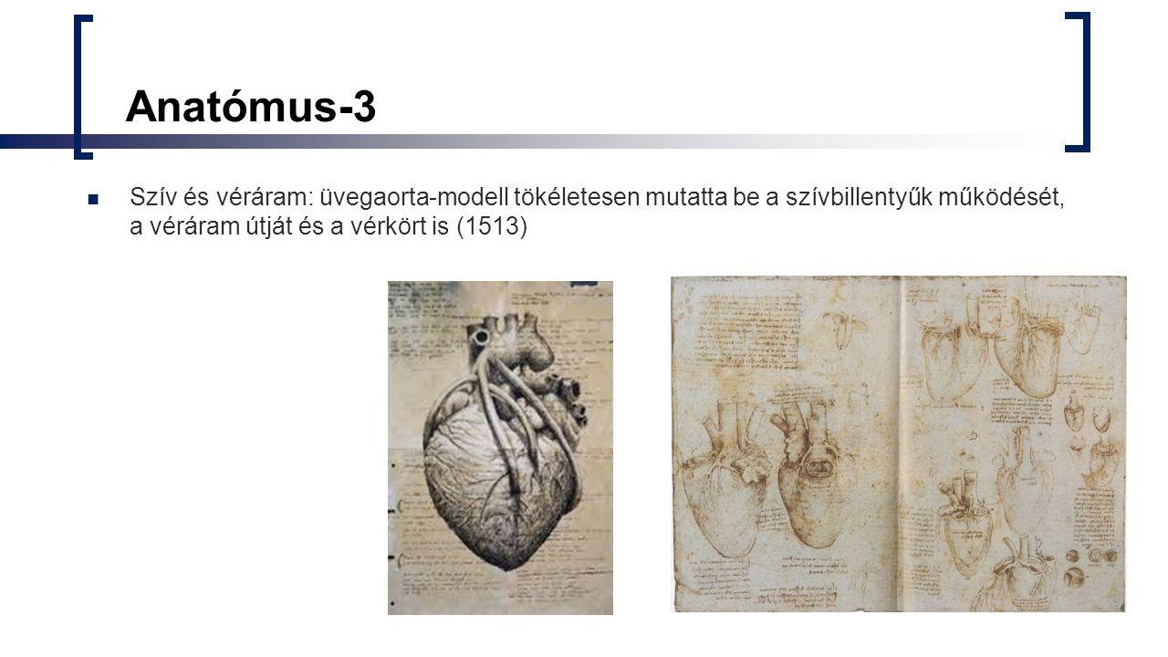 Anatómus- 4 Csontok, ízületek Váll és csípőízület (tökéletes gömbcsukló)