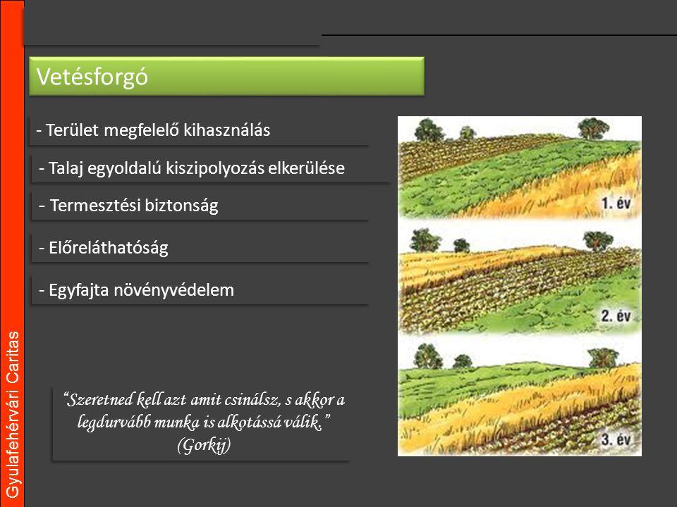 Gyulafehérvári Caritas - Terület megfelelő kihasználás Szeretned kell azt amit csinálsz, s akkor a legdurvább munka is alkotássá válik. (Gorkij) Vetésforgó - Talaj egyoldalú kiszipolyozás elkerülése - Termesztési biztonság - Előreláthatóság - Egyfajta növényvédelem