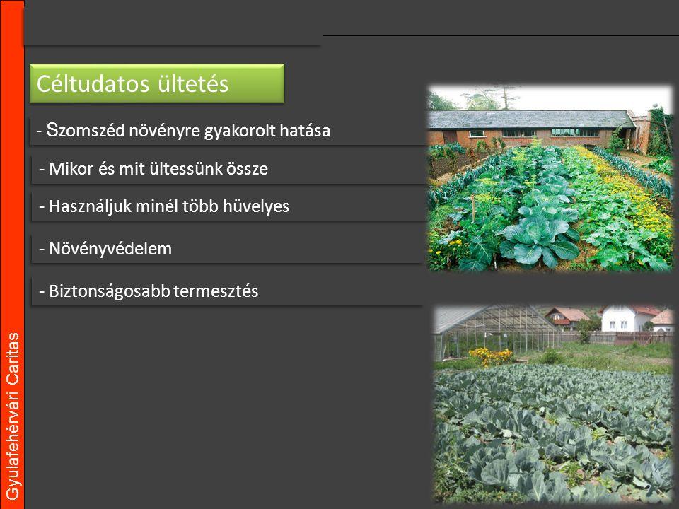 Gyulafehérvári Caritas - S zomszéd növényre gyakorolt hatása - Mikor és mit ültessünk össze - Használjuk minél több hüvelyes - Növényvédelem - Biztonságosabb termesztés Céltudatos ültetés