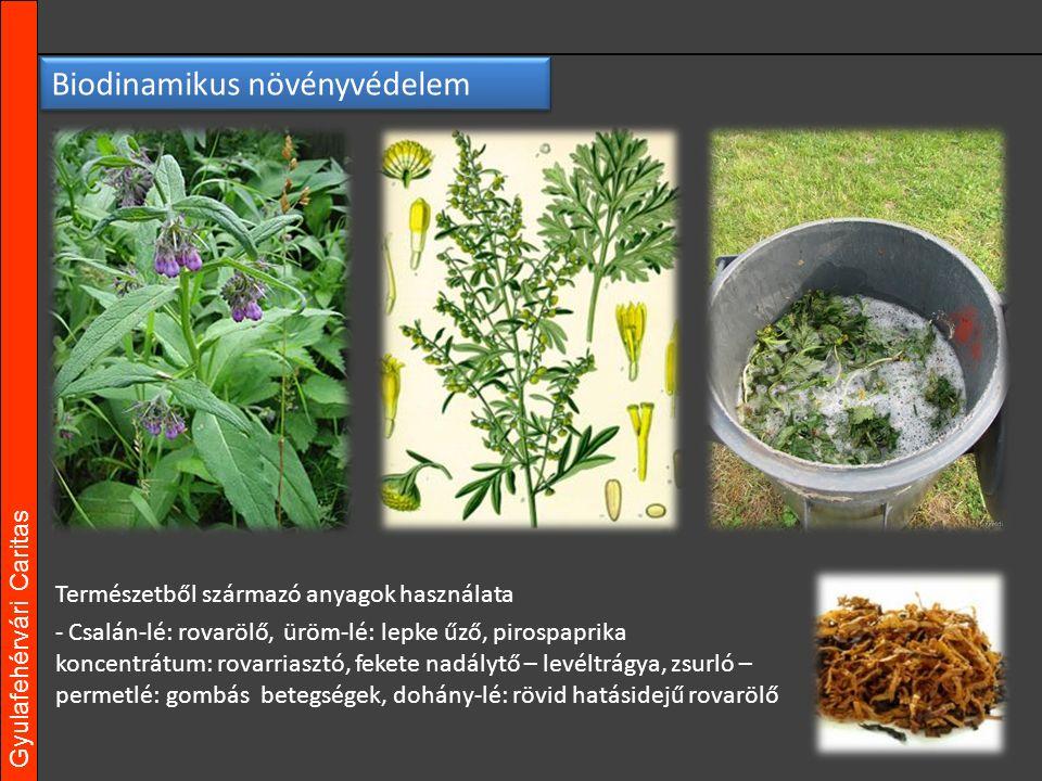 Gyulafehérvári Caritas Természetből származó anyagok használata - Csalán-lé: rovarölő, üröm-lé: lepke űző, pirospaprika koncentrátum: rovarriasztó, fekete nadálytő – levéltrágya, zsurló – permetlé: gombás betegségek, dohány-lé: rövid hatásidejű rovarölő Biodinamikus növényvédelem