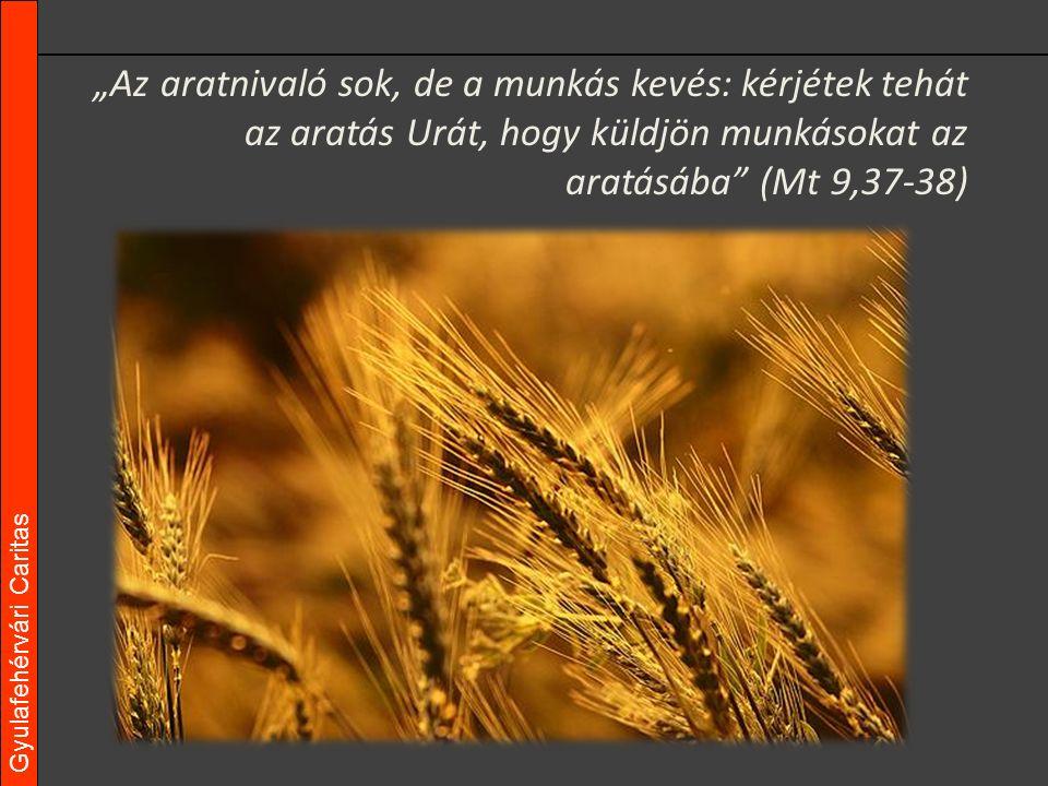 """Gyulafehérvári Caritas """"Az aratnivaló sok, de a munkás kevés: kérjétek tehát az aratás Urát, hogy küldjön munkásokat az aratásába (Mt 9,37-38)"""