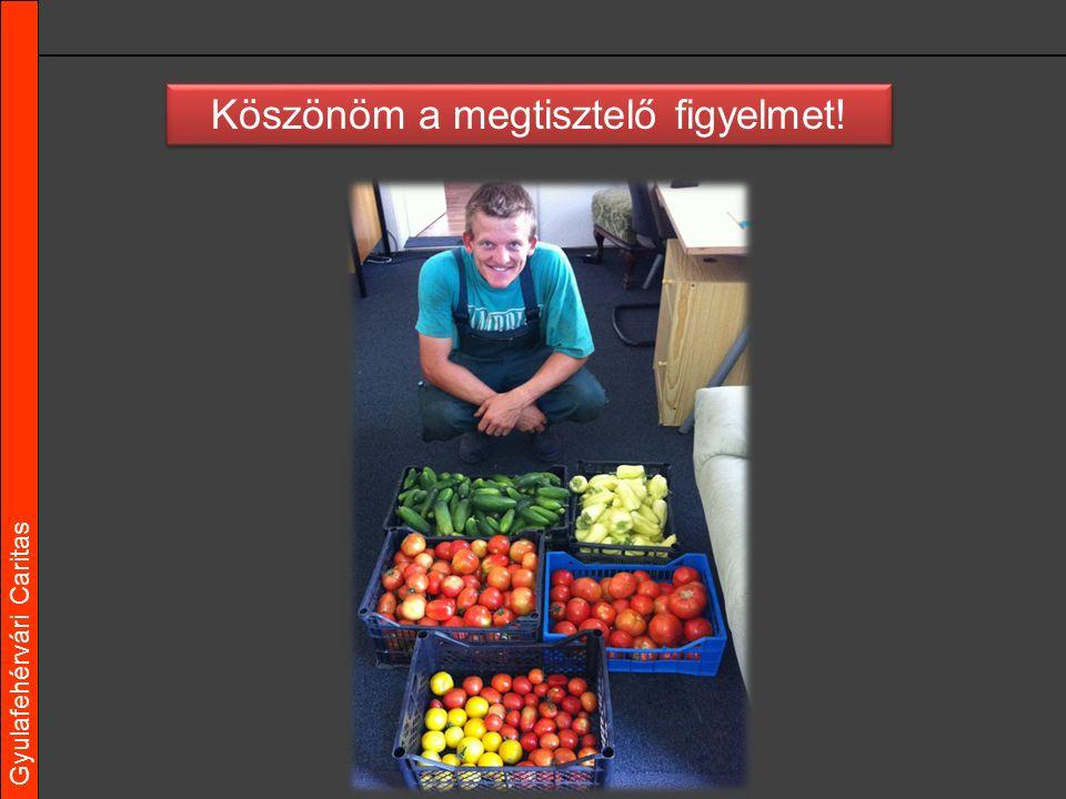 Gyulafehérvári Caritas Köszönöm a megtisztelő figyelmet!