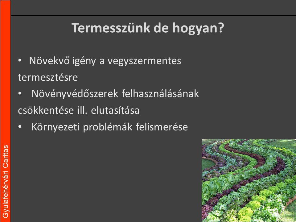 """Gyulafehérvári Caritas Jelenleg ezt esszük… Intenzív növénytermesztési közegekből származó zöldségek A fogyasztó """"igényeinek megfelelő """"minőségű zöldségnövények"""
