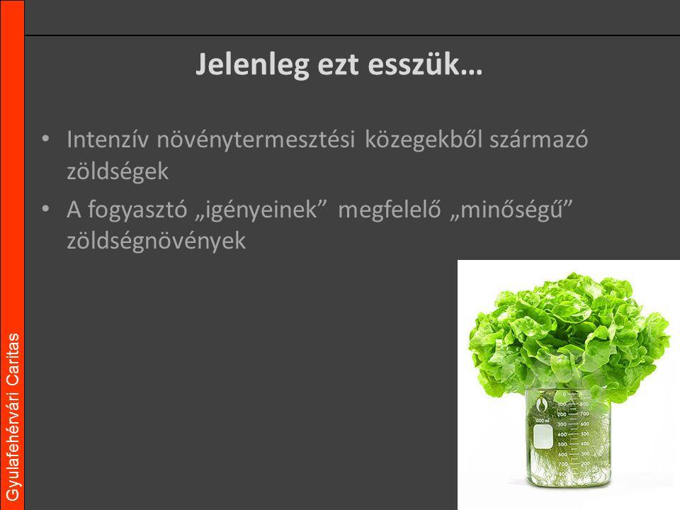Gyulafehérvári Caritas - Vásárló igényeinek megfelelő Az vagy amit megeszel. - Megfelelő tápanyagellátásban részesülő - Káros anyagokat ne tartalmazzon - Vegyszerhasznált amennyi szükséges - Biológiai növényvédelem amennyi lehetséges Minőség