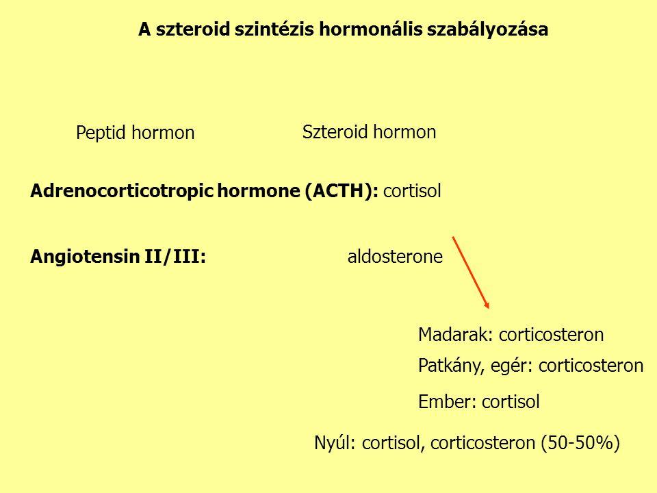 Adrenocorticotropic hormone (ACTH): cortisol Angiotensin II/III: aldosterone Nyúl: cortisol, corticosteron (50-50%) Madarak: corticosteron Ember: cortisol Patkány, egér: corticosteron Peptid hormon Szteroid hormon A szteroid szintézis hormonális szabályozása