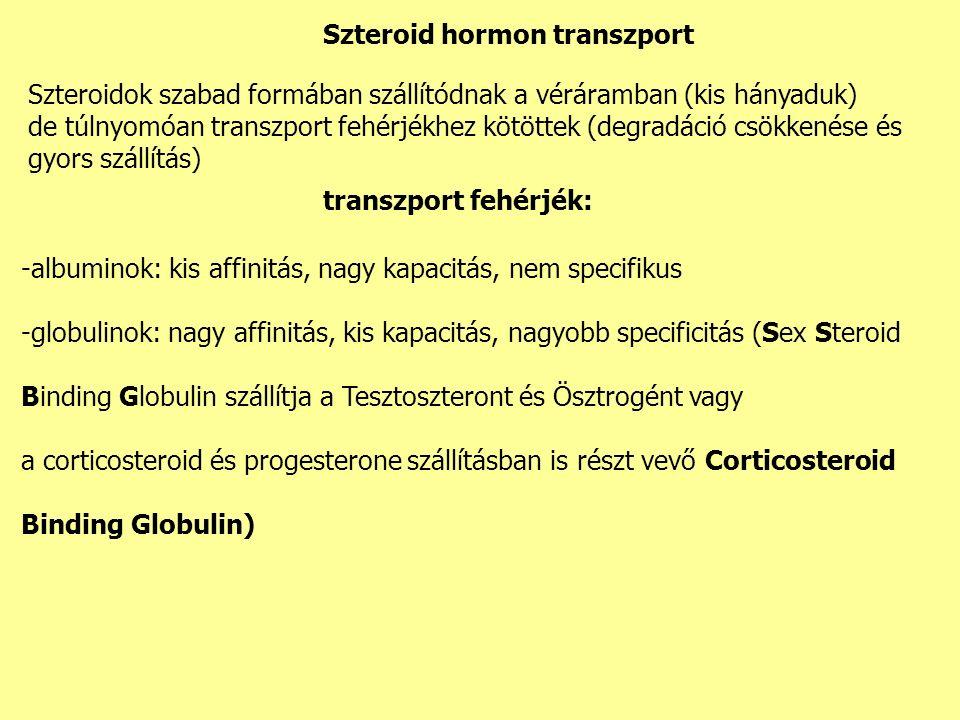 Szteroidok szabad formában szállítódnak a véráramban (kis hányaduk) de túlnyomóan transzport fehérjékhez kötöttek (degradáció csökkenése és gyors szállítás) Szteroid hormon transzport transzport fehérjék: -albuminok: kis affinitás, nagy kapacitás, nem specifikus -globulinok: nagy affinitás, kis kapacitás, nagyobb specificitás (Sex Steroid Binding Globulin szállítja a Tesztoszteront és Ösztrogént vagy a corticosteroid és progesterone szállításban is részt vevő Corticosteroid Binding Globulin)