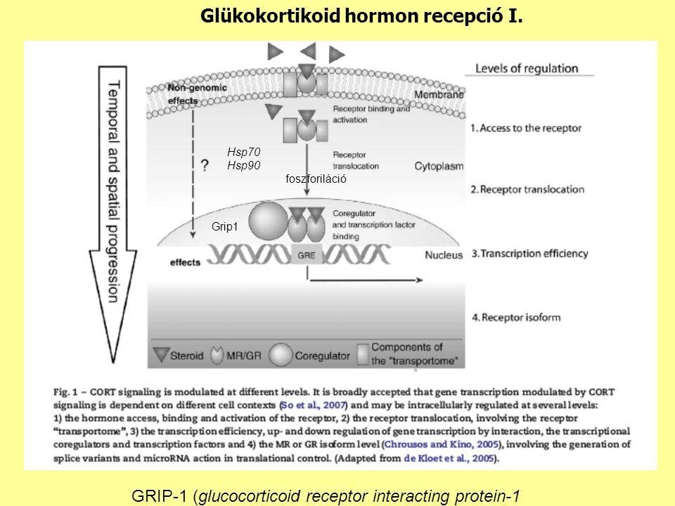 Glükokortikoid hormon recepció I.