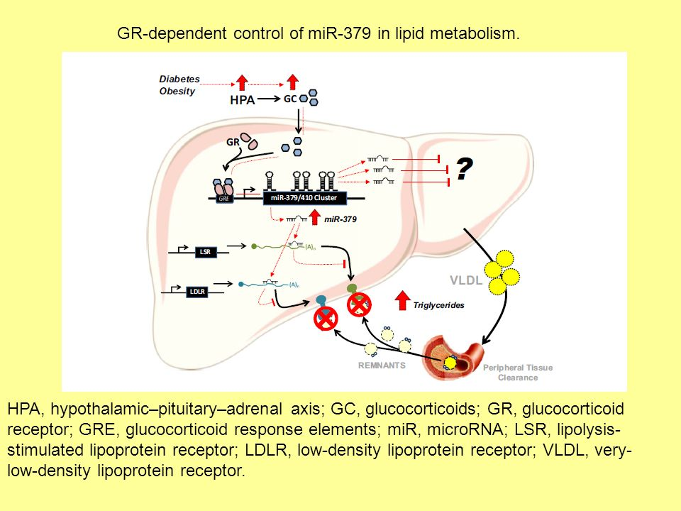 HPA, hypothalamic–pituitary–adrenal axis; GC, glucocorticoids; GR, glucocorticoid receptor; GRE, glucocorticoid response elements; miR, microRNA; LSR, lipolysis- stimulated lipoprotein receptor; LDLR, low-density lipoprotein receptor; VLDL, very- low-density lipoprotein receptor.