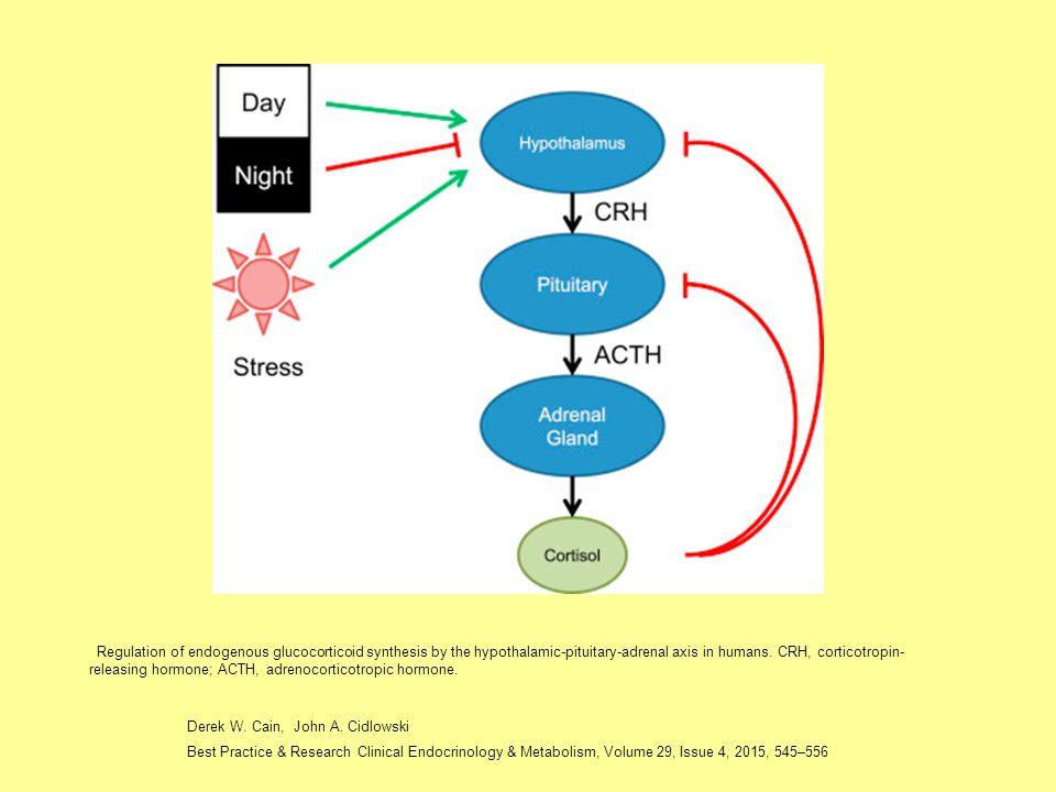 Szteroid metabolizmus, lebomlás