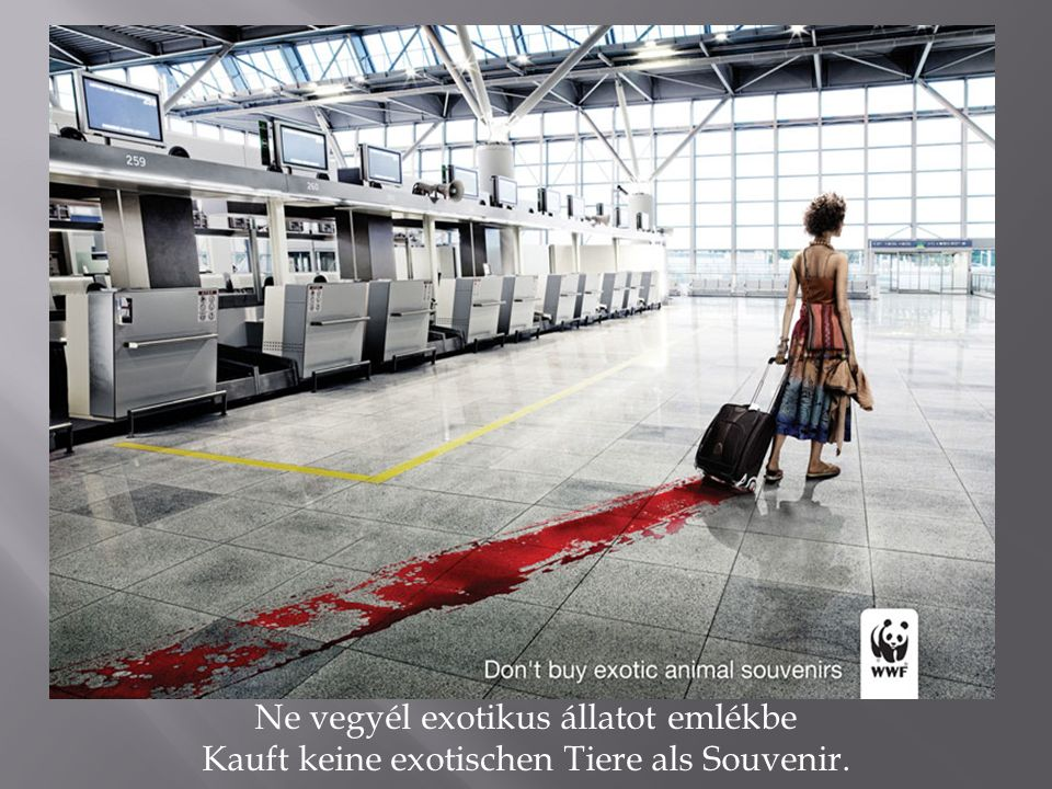 Ne vegyél exotikus állatot emlékbe Kauft keine exotischen Tiere als Souvenir.
