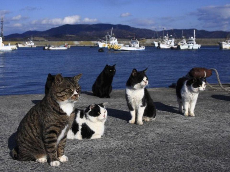 Es conocida como la isla de los gatos porque existen en ella 6 felinos por cada residente humano.
