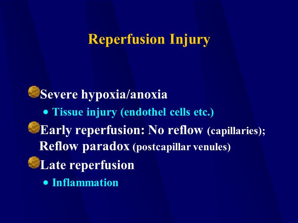 Reperfusion Injury Severe hypoxia/anoxia  Tissue injury (endothel cells etc.) Early reperfusion: No reflow (capillaries); Reflow paradox (postcapilla
