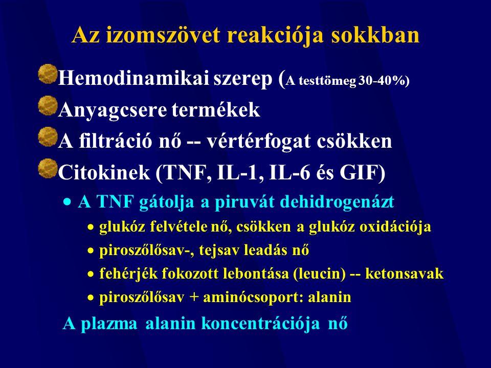 Az izomszövet reakciója sokkban Hemodinamikai szerep ( A testtömeg 30-40%) Anyagcsere termékek A filtráció nő -- vértérfogat csökken Citokinek (TNF, IL-1, IL-6 és GIF)  A TNF gátolja a piruvát dehidrogenázt  glukóz felvétele nő, csökken a glukóz oxidációja  piroszőlősav-, tejsav leadás nő  fehérjék fokozott lebontása (leucin) -- ketonsavak  piroszőlősav + aminócsoport: alanin A plazma alanin koncentrációja nő