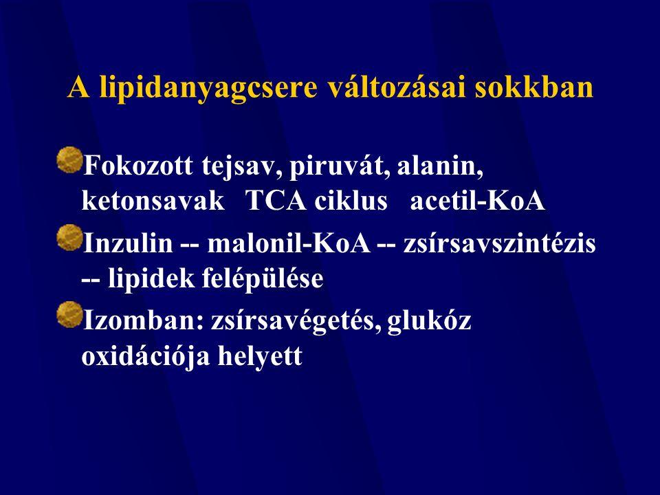 A lipidanyagcsere változásai sokkban Fokozott tejsav, piruvát, alanin, ketonsavak TCA ciklus acetil-KoA Inzulin -- malonil-KoA -- zsírsavszintézis -- lipidek felépülése Izomban: zsírsavégetés, glukóz oxidációja helyett