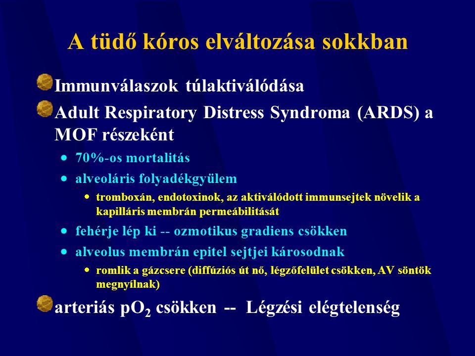 A tüdő kóros elváltozása sokkban Immunválaszok túlaktiválódása Adult Respiratory Distress Syndroma (ARDS) a MOF részeként  70%-os mortalitás  alveol