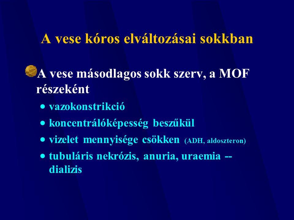 A vese kóros elváltozásai sokkban A vese másodlagos sokk szerv, a MOF részeként  vazokonstrikció  koncentrálóképesség beszűkül  vizelet mennyisége
