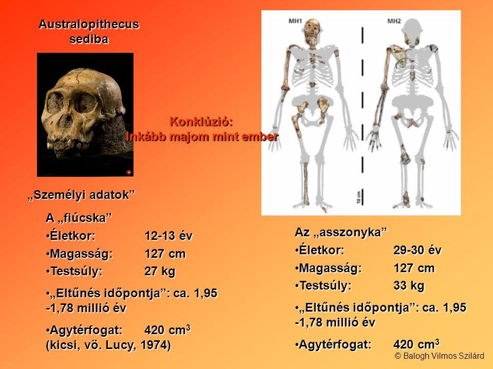 Australopithecus sediba Személyi adatok A fiúcska Életkor: 12-13 évÉletkor: 12-13 év Magasság:127 cmMagasság:127 cm Testsúly: 27 kgTestsúly: 27 kg Elt