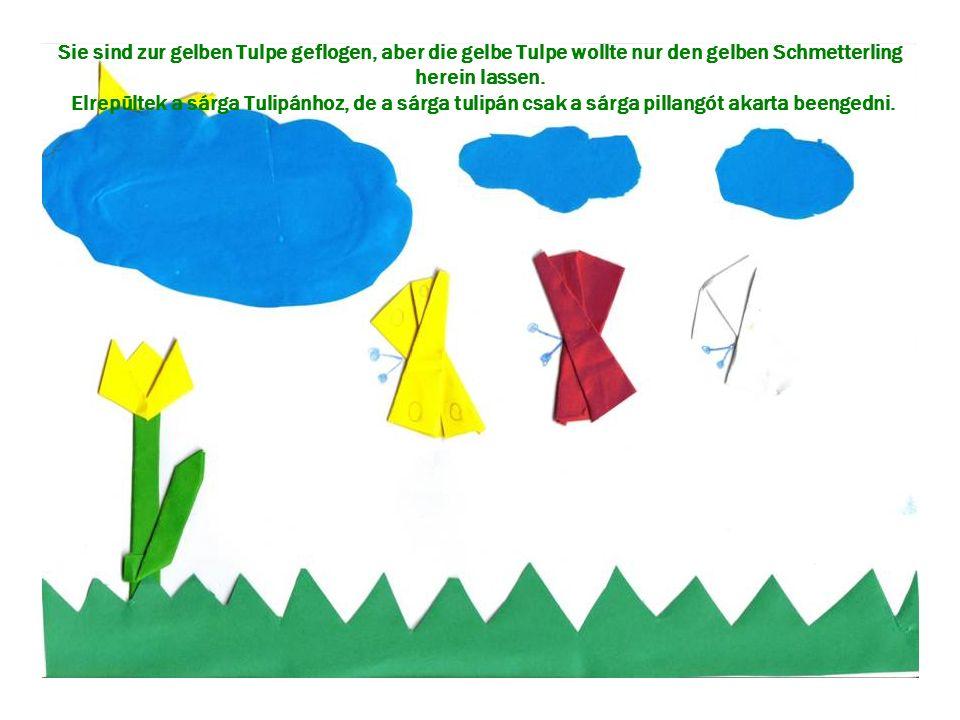 Sie sind zur gelben Tulpe geflogen, aber die gelbe Tulpe wollte nur den gelben Schmetterling herein lassen. Elrepültek a sárga Tulipánhoz, de a sárga