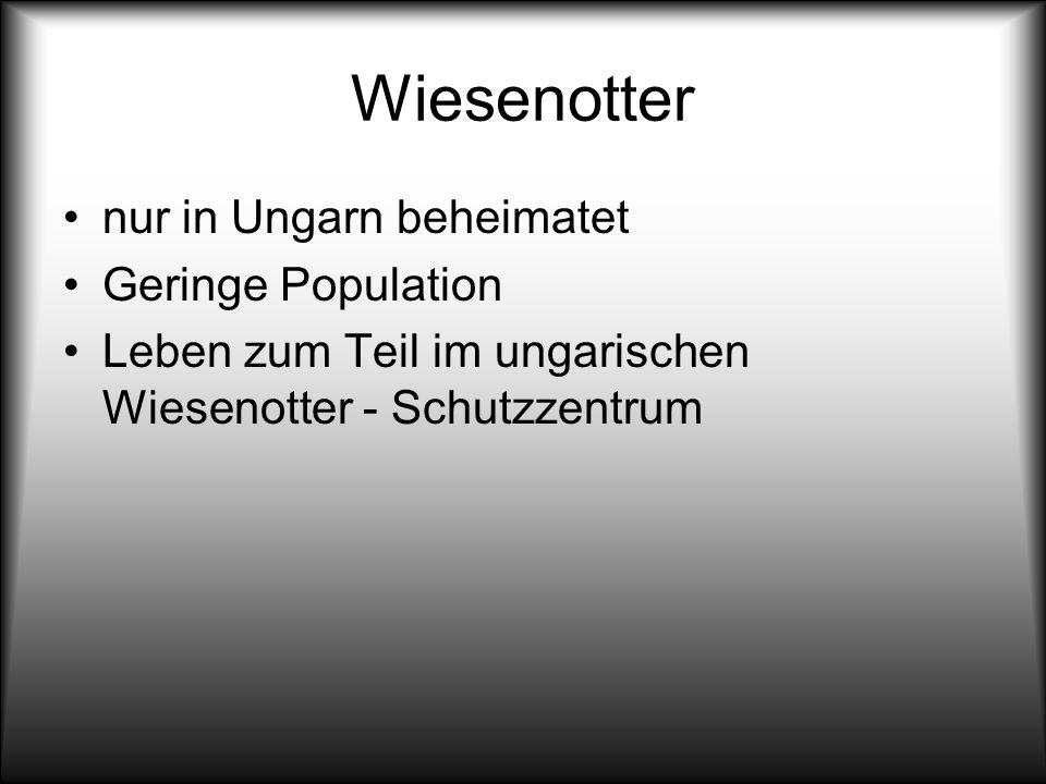 Wiesenotter nur in Ungarn beheimatet Geringe Population Leben zum Teil im ungarischen Wiesenotter - Schutzzentrum