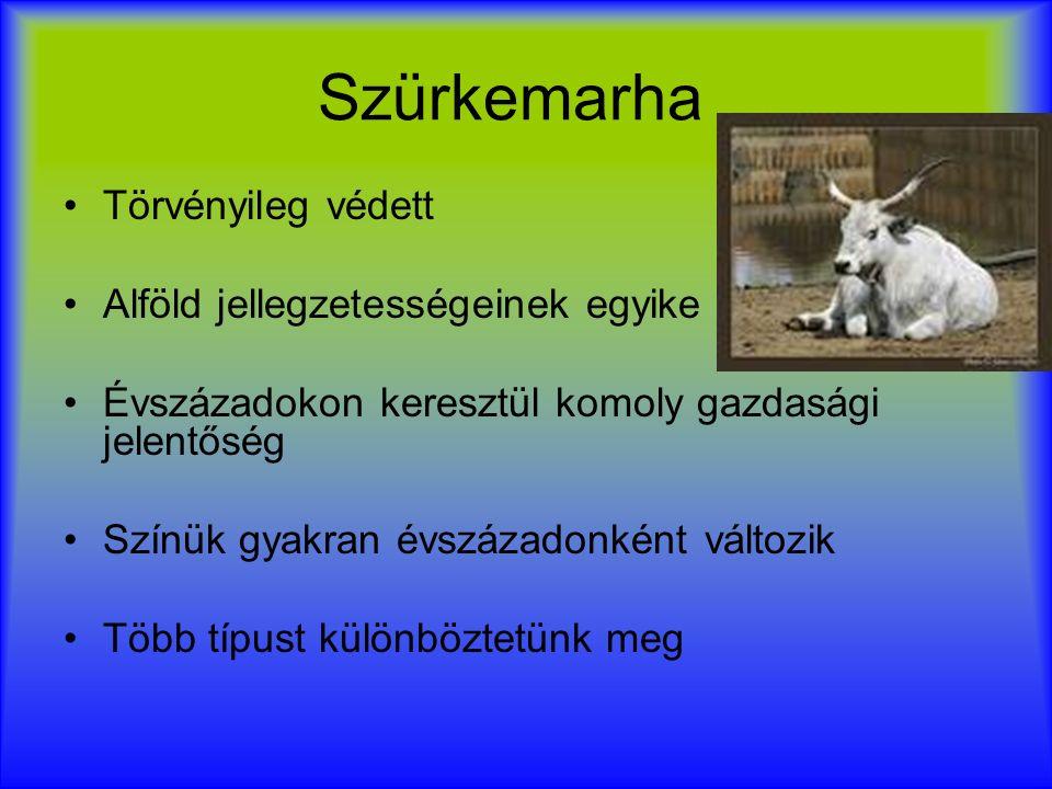 Ungarisches Steppenrind Ist eine Hausrindrasse aus dem ungarischen Tiefland Es hat jahrundertlang eine wirtschaftliche Bedeutung Wir unterscheiden mehrere Arten Sie wechseln alle hundert Jahre die Farbe