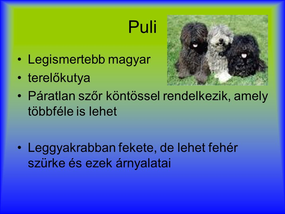 Puli Legismertebb magyar terelőkutya Páratlan szőr köntössel rendelkezik, amely többféle is lehet Leggyakrabban fekete, de lehet fehér szürke és ezek