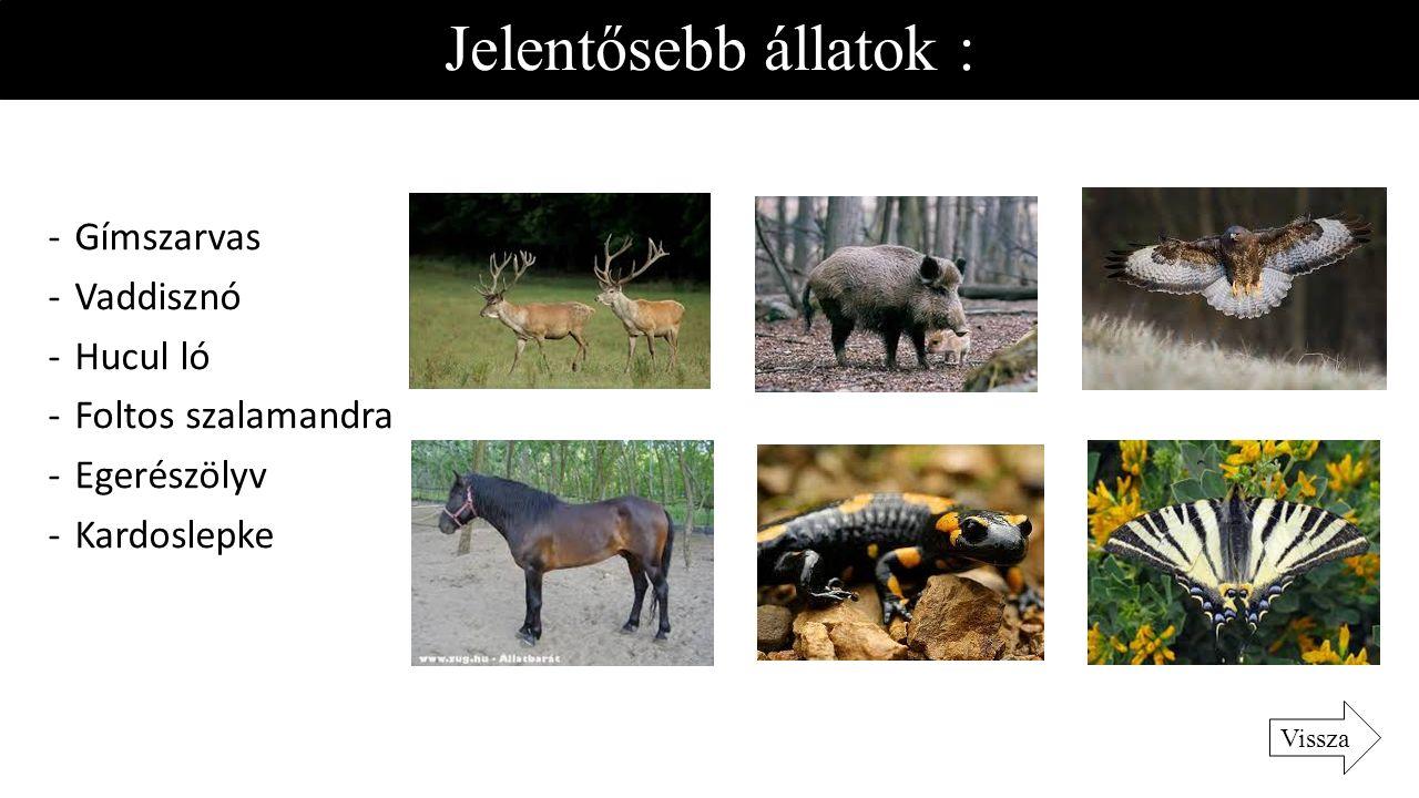 Jelentősebb állatok : -Gímszarvas -Vaddisznó -Hucul ló -Foltos szalamandra -Egerészölyv -Kardoslepke Vissza