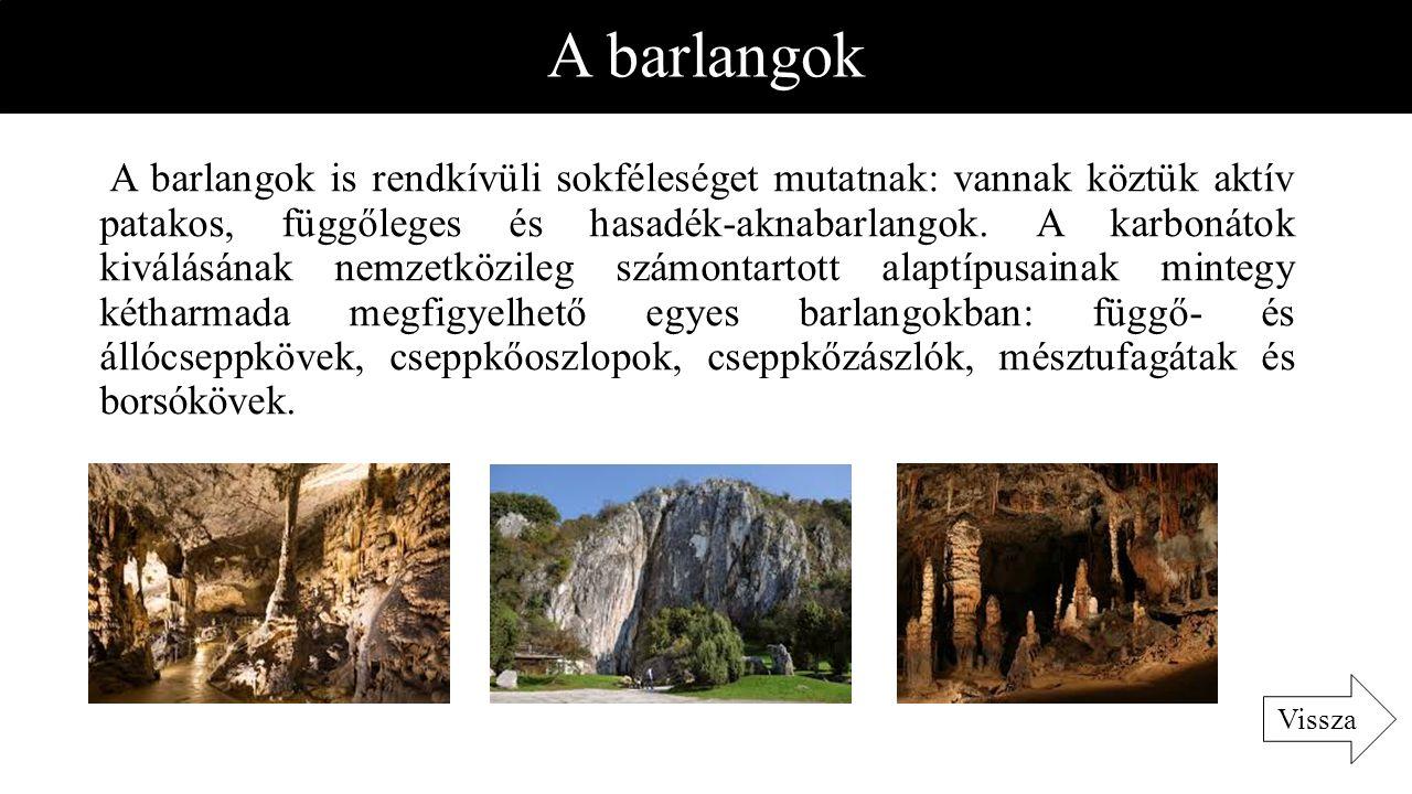 A barlangok A barlangok is rendkívüli sokféleséget mutatnak: vannak köztük aktív patakos, függőleges és hasadék-aknabarlangok. A karbonátok kiválásána