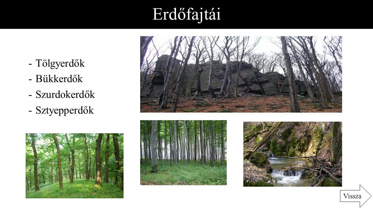 Erdőfajtái -Tölgyerdők -Bükkerdők -Szurdokerdők -Sztyepperdők Vissza