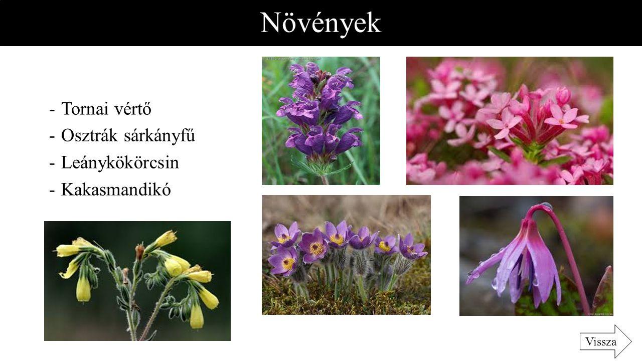 Növények -Tornai vértő -Osztrák sárkányfű -Leánykökörcsin -Kakasmandikó Vissza