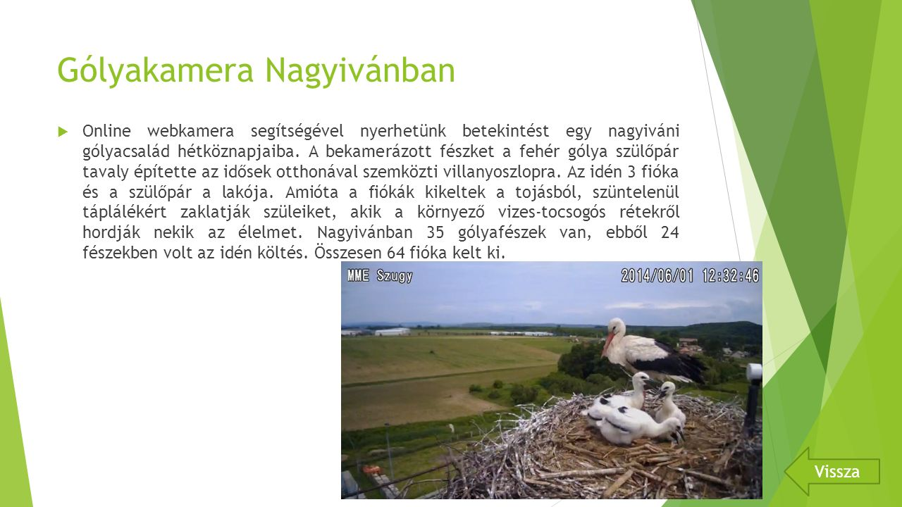 Gólyakamera Nagyivánban  Online webkamera segítségével nyerhetünk betekintést egy nagyiváni gólyacsalád hétköznapjaiba.