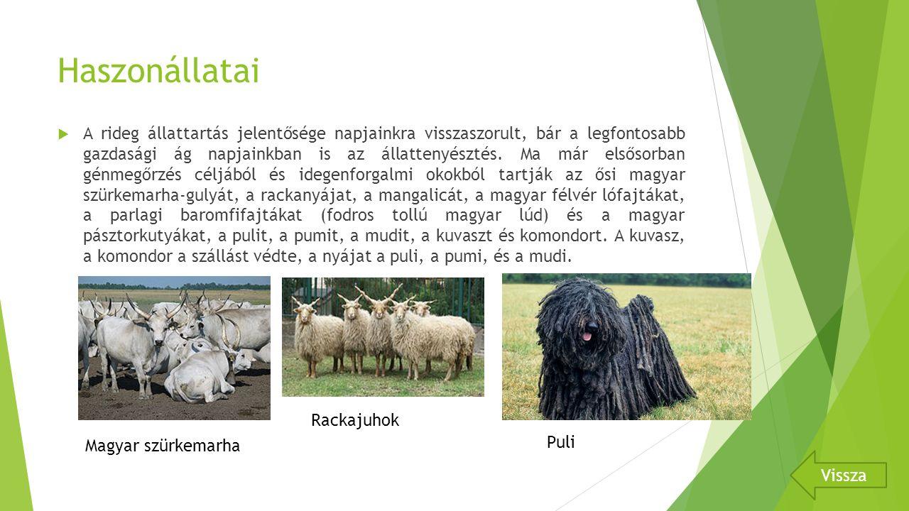 Haszonállatai  A rideg állattartás jelentősége napjainkra visszaszorult, bár a legfontosabb gazdasági ág napjainkban is az állattenyésztés.