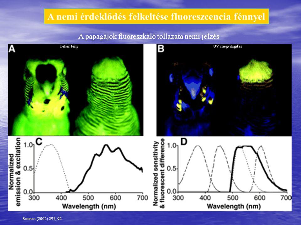 A nemi érdeklődés felkeltése fluoreszcencia fénnyel Science (2002) 295, 92 Fehér fényUV megvilágítás A papagájok fluoreszkáló tollazata nemi jelzés