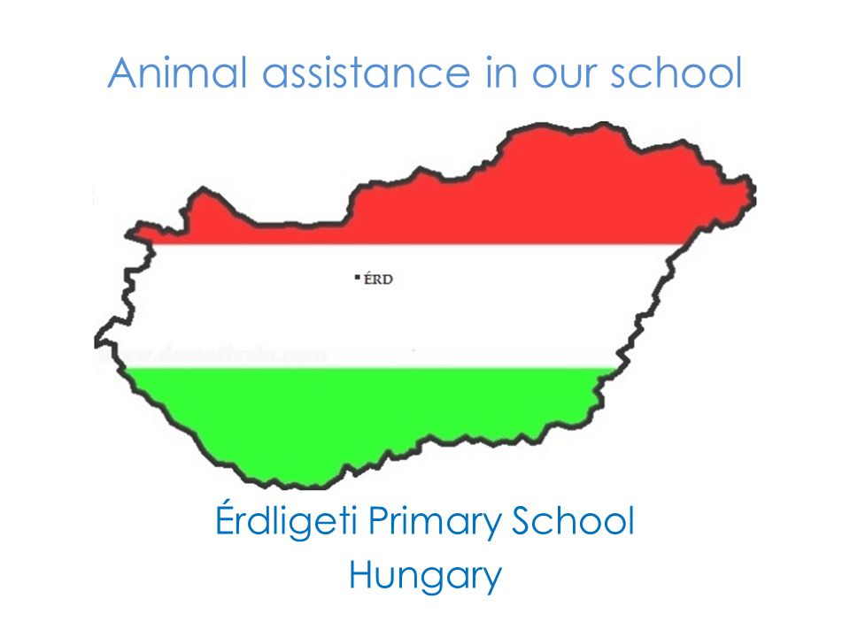Animal assistance in our school Érdligeti Primary School Hungary