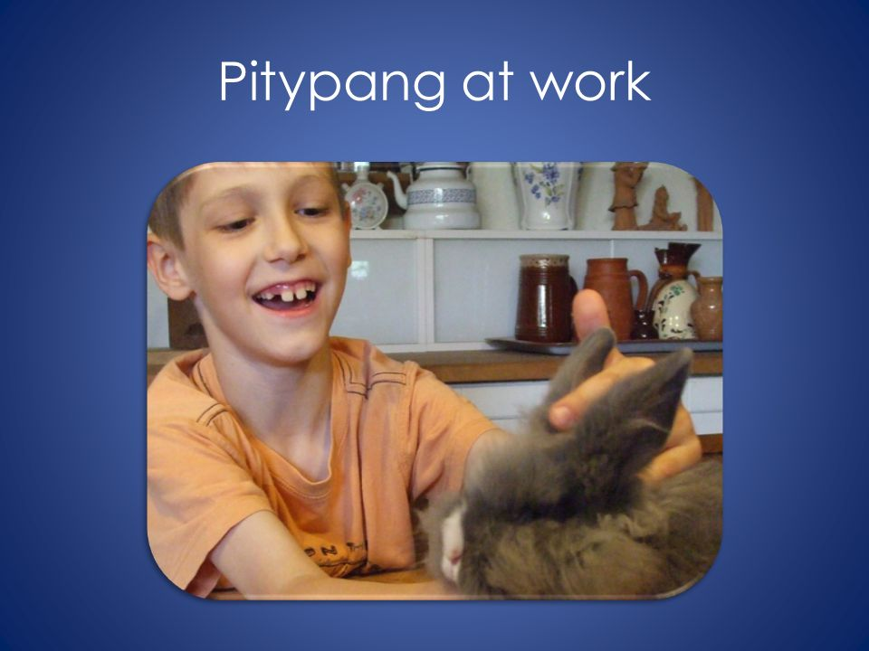 Pitypang at work