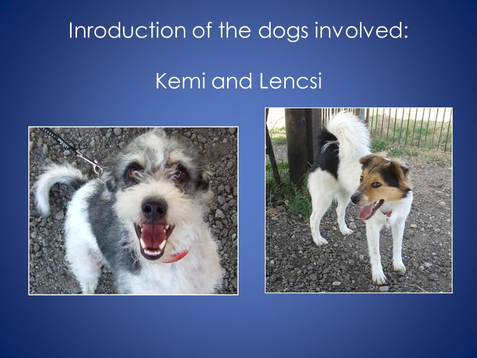 Inroduction of the dogs involved: Kemi and Lencsi
