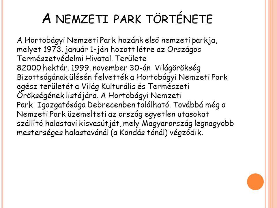 A NEMZETI PARK KIALAKULÁSA A Hortobágyi nemzeti park területén az Alföldre jellemző élőhelyek mindegyike megtalálható.