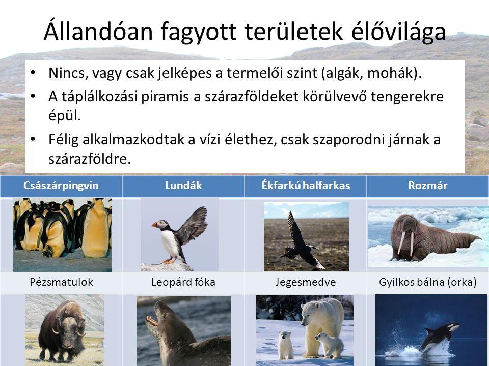 Eszkimók Az Északi-sarkvidéken alakultak csak ki települések A Déli-sarkvidéken csak kutató állomások vannak Grönland, Alaszka vagy a kanadai és szibériai északi szigetvilág az eszkimók földje.