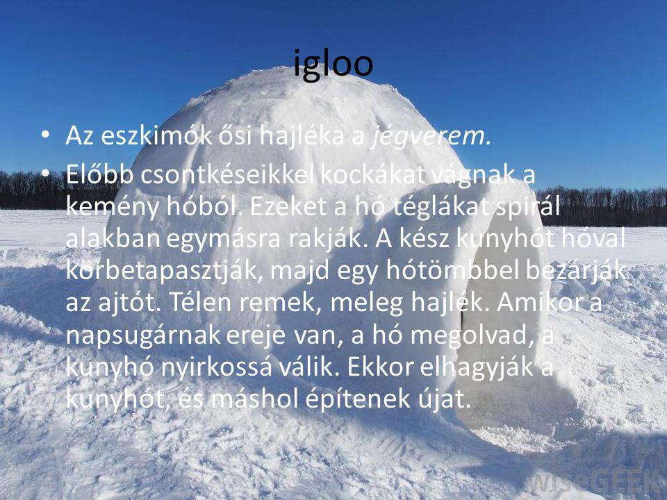 igloo Az eszkimók ősi hajléka a jégverem. Előbb csontkéseikkel kockákat vágnak a kemény hóból. Ezeket a hó téglákat spirál alakban egymásra rakják. A
