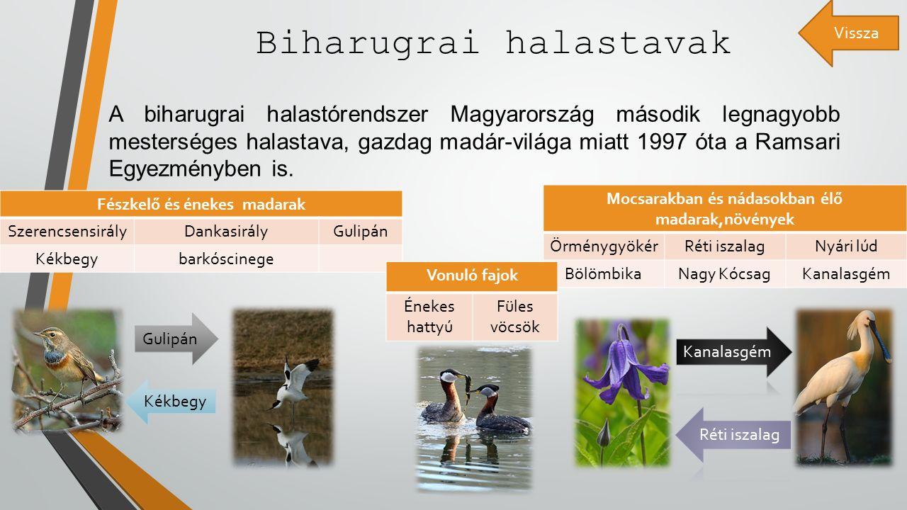 Biharugrai halastavak A biharugrai halastórendszer Magyarország második legnagyobb mesterséges halastava, gazdag madár-világa miatt 1997 óta a Ramsari Egyezményben is.