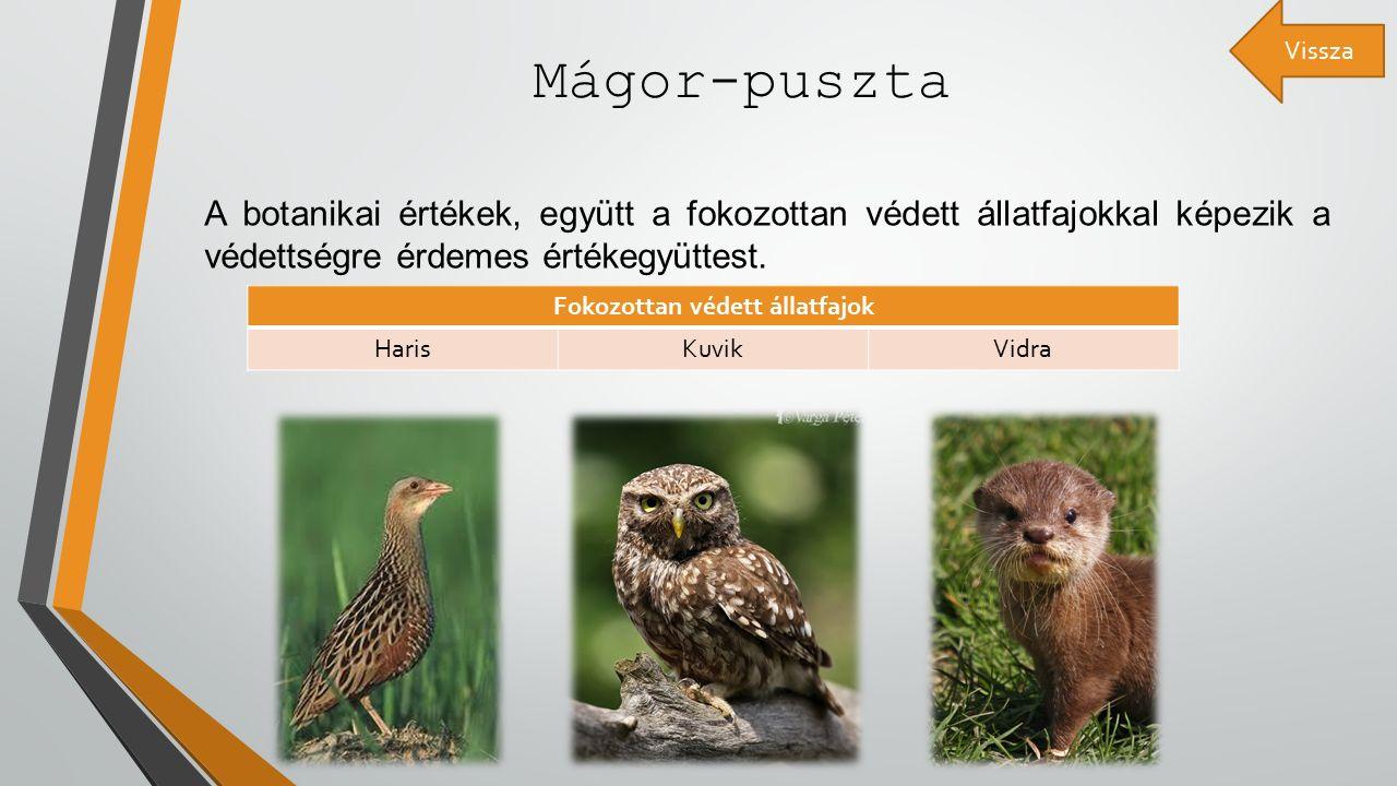 Mágor-puszta A botanikai értékek, együtt a fokozottan védett állatfajokkal képezik a védettségre érdemes értékegyüttest.