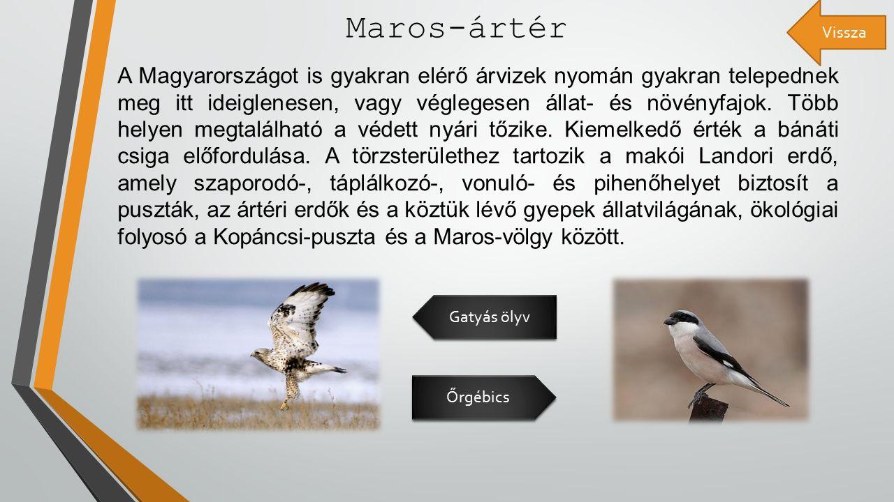 Maros-ártér A Magyarországot is gyakran elérő árvizek nyomán gyakran telepednek meg itt ideiglenesen, vagy véglegesen állat- és növényfajok.