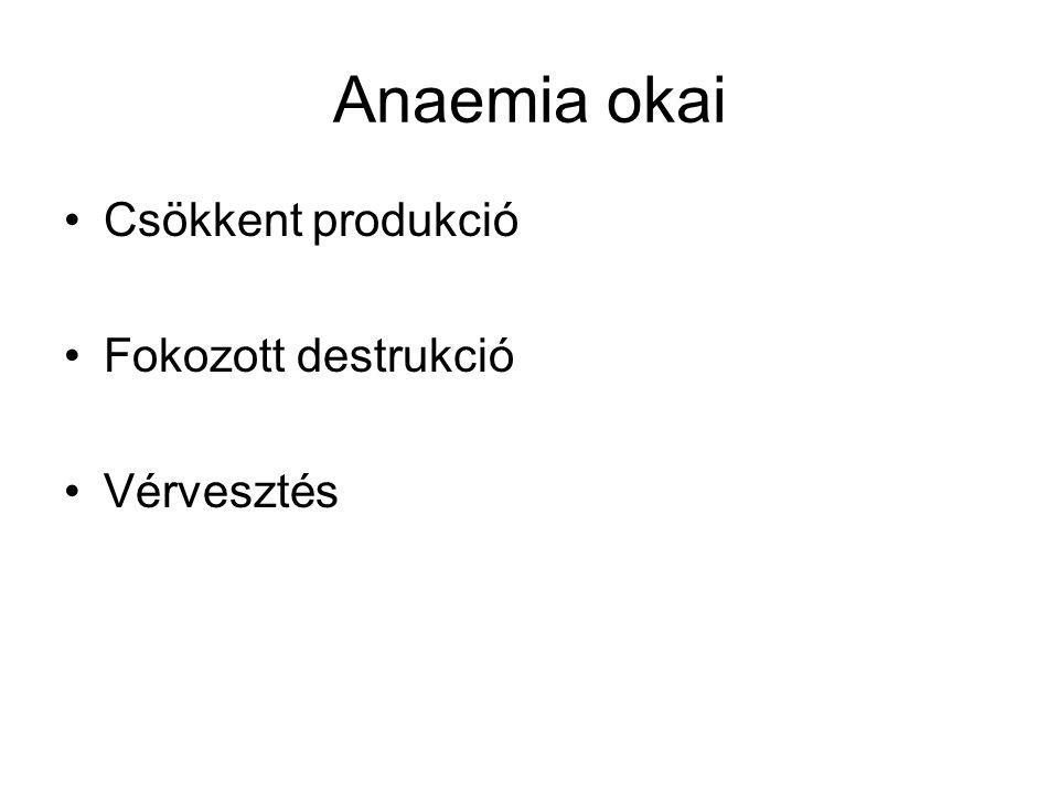 Anaemia okai Csökkent produkció Fokozott destrukció Vérvesztés