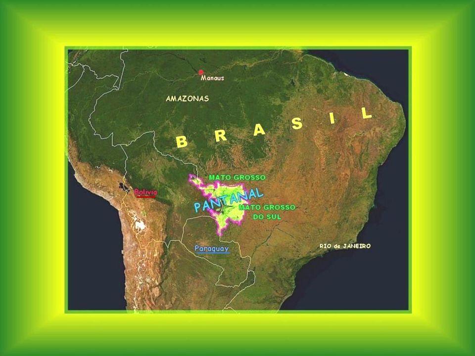 A Pantanal a világ legnagyobb mocsaras területe, sík táj, szelíd lejtőkkel és kanyargós folyókkal.