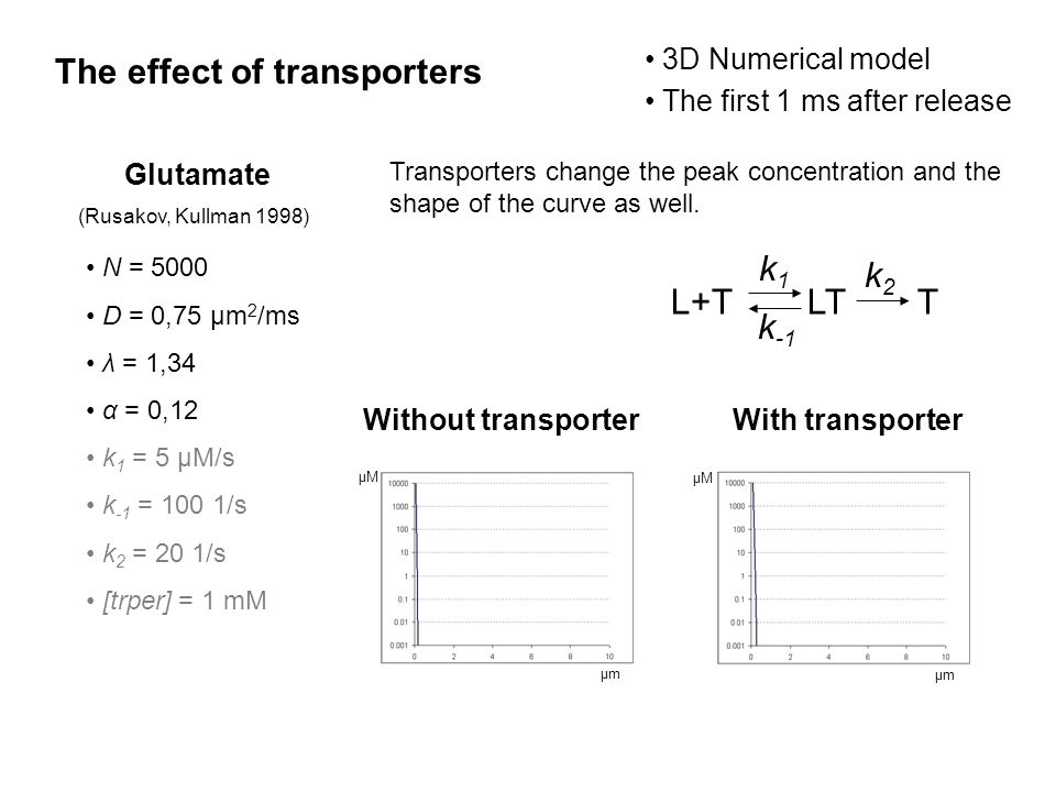 The effect of transporters Glutamate (Rusakov, Kullman 1998) N = 5000 D = 0,75 μm 2 /ms λ = 1,34 α = 0,12 k 1 = 5 μM/s k -1 = 100 1/s k 2 = 20 1/s [trper] = 1 mM μmμm μMμM μmμm μMμM With transporter L+TLTT k1k1 k -1 k2k2 Without transporter Transporters change the peak concentration and the shape of the curve as well.